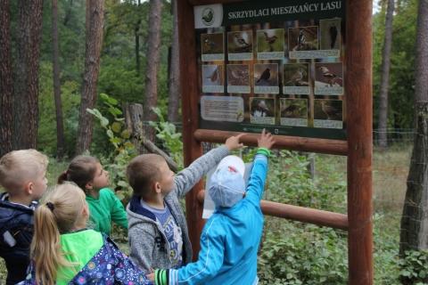 """Galeria dla Warsztaty przyrodnicze """"Leśna szkoła odkrywców"""""""